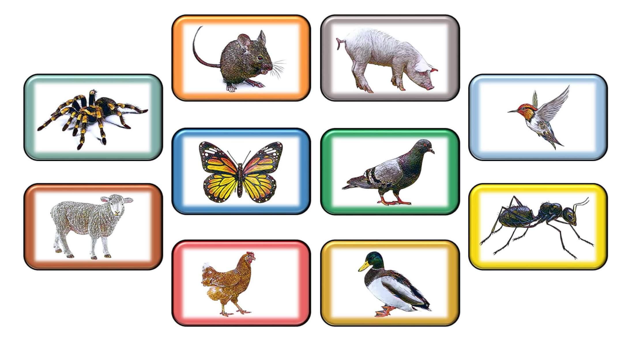 10 dyr på engelsk - head (compressed)